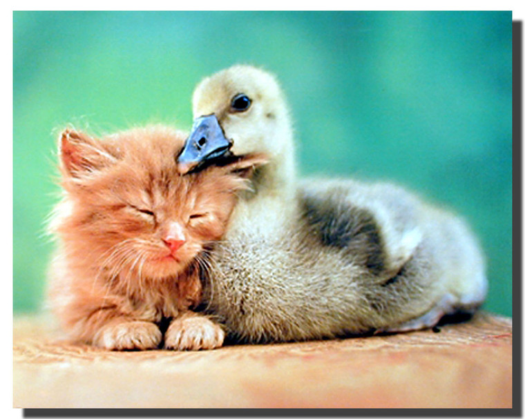 Cat and Duck Friends Posters