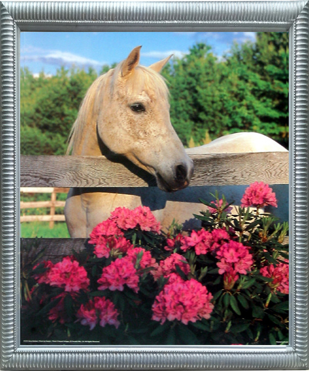 Impact Posters Gallery Mare Horse with Flowers Framed Wall Decoration White Morgan Silver Picture Art Print