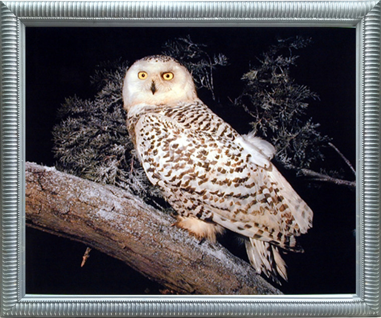 Impact Posters Gallery Snow Owl Nature Animal Wildlife Silver Art Print Framed Wall Decor Picture (20x24)