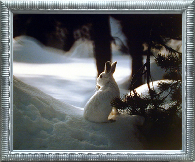 Impact Posters Gallery Cute White Rabbit in Snow Wildlife Animal Silver Art Print Framed Wall Decor Picture (20x24)