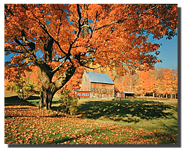 New England Fall Colors Posters