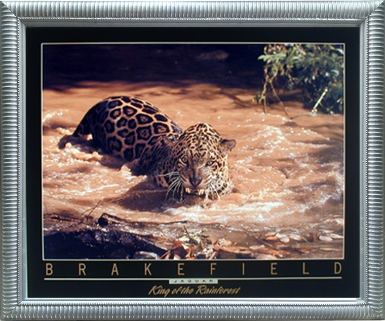 Impact Posters Gallery Wild Jaguar (Panthera Leopard) Wildlife Animal Wall Decor Silver Framed Picture Art Print