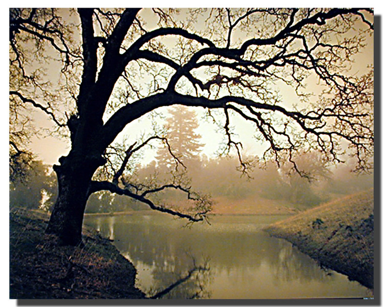 Golden Sunset Pond Posters