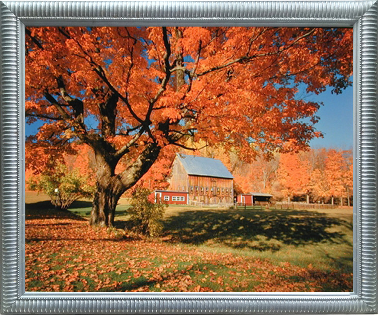 Impact Posters Gallery New England Fallen Trees Scenery Nature Landscape Wall Decor Picture Silver Framed Art Print