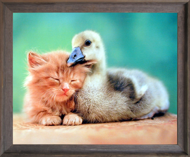 Impact Posters Gallery Duckling Friends Framed Wall Decoration Cute Cat Kids Room Animal Barnwood Framed Picture Art Print (19x23)