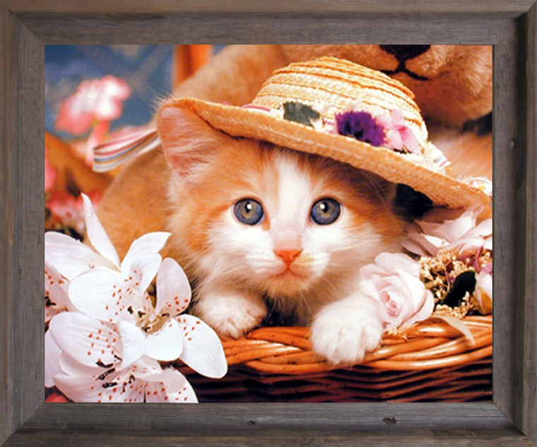 Impact Posters Gallery Cute Cat Animal Framed Wall Decoration Art Print Kitten in a Hat Kids Room Barnwood Picture (19x23)