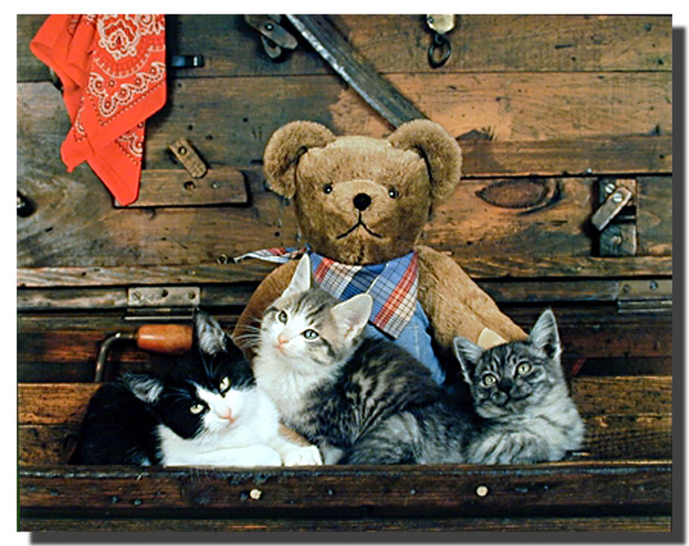 Western Teddy and Cats Posters
