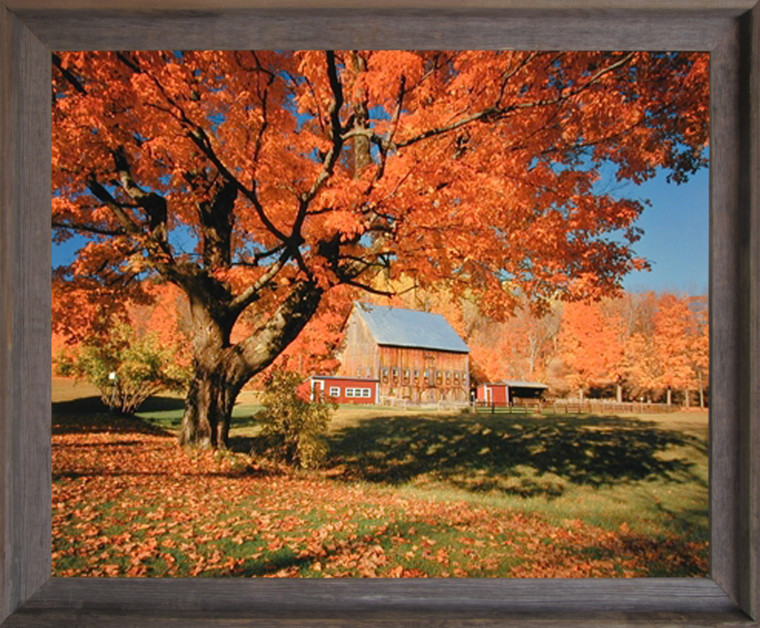 Impact Posters Gallery New England Fallen Trees Scenery Nature Landscape Wall Decor Picture Barnwood Framed Art Print (19x23)