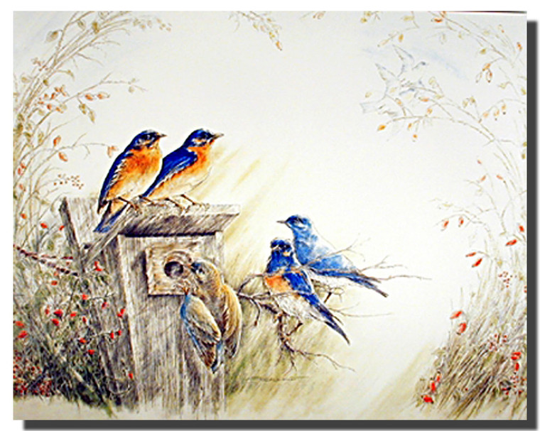 Bluebirds Posters
