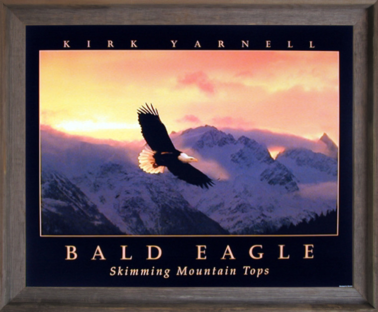 Framed Wall Decoration Bald Eagle Skimming Mountain Tops Sunset Nature Barnwood Picture Framed Art Print Poster (19x23)