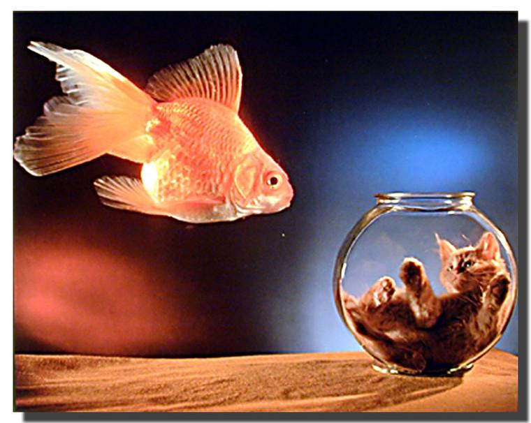 Cat in Fishbowl Poster