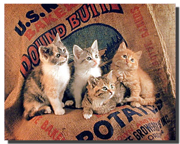 Gunnie Sack Cats Poster