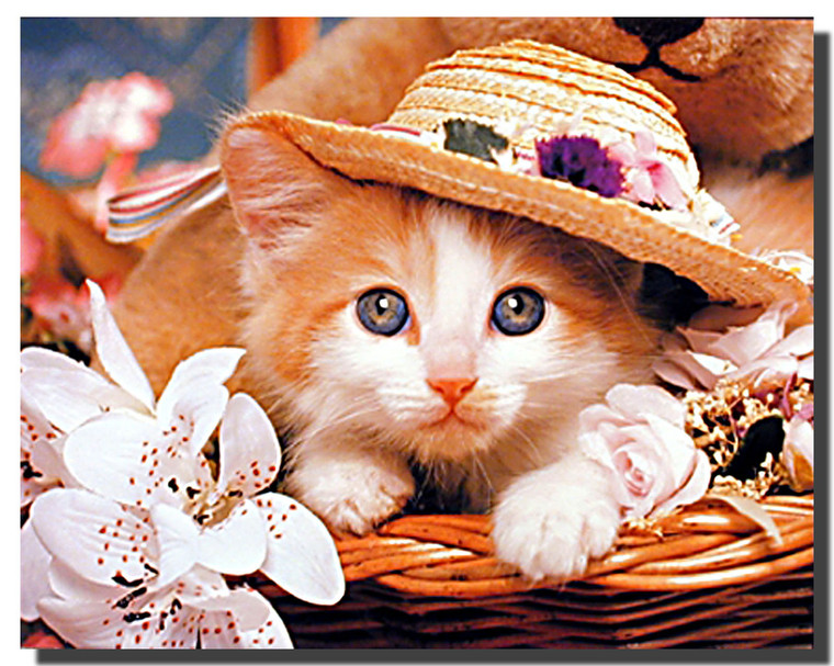 Cat in Hat Poster