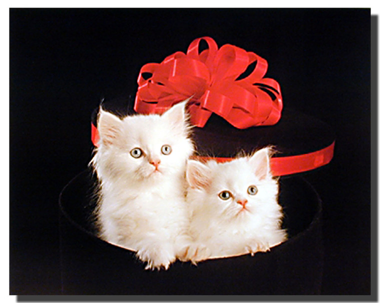 Cats in a Hat Box Print and Poster