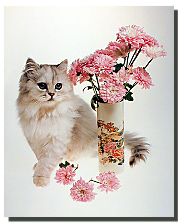 Cat Poster - White Cat and Carnations