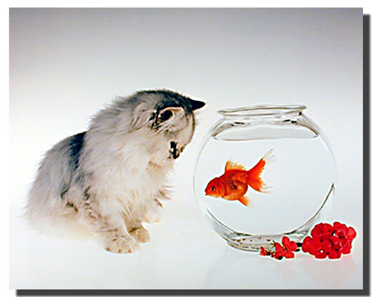 Cat and Goldfish Poster