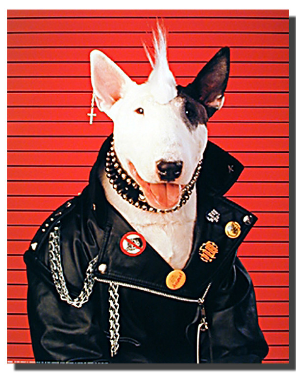 Dog Poster- Punk