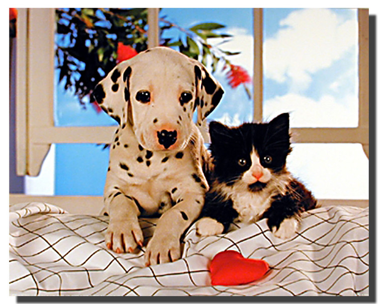 Dalmation Pup and Kitten Poster
