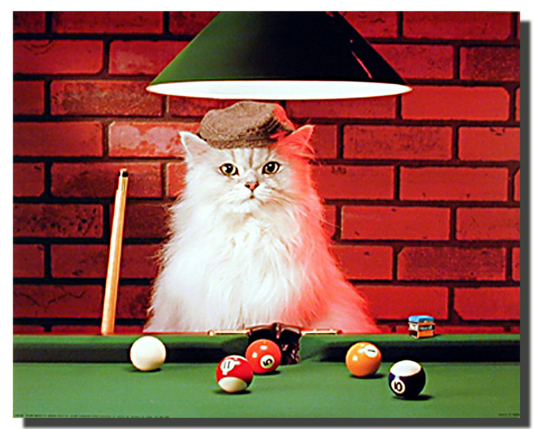 Cat Playing Pool Poster
