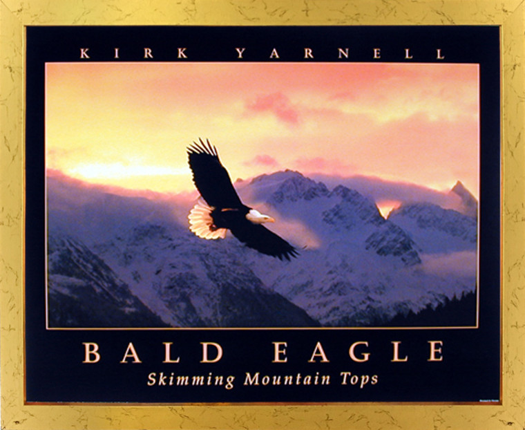 Impact Posters Gallery Bald Eagle Skimming Mountain Tops Sunset Nature Golden Picture Art Print Framed Wall Decoration