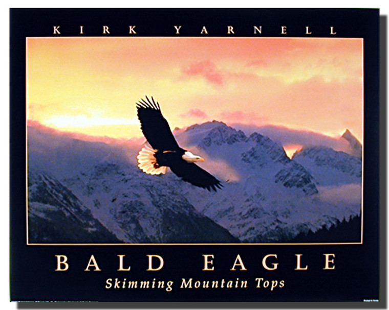 Eagle Sunset Posters- Nature Sky