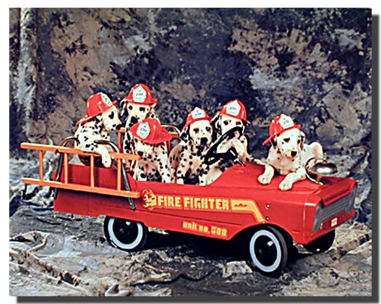 Dalmatian Puppies in Fire Truck Poster