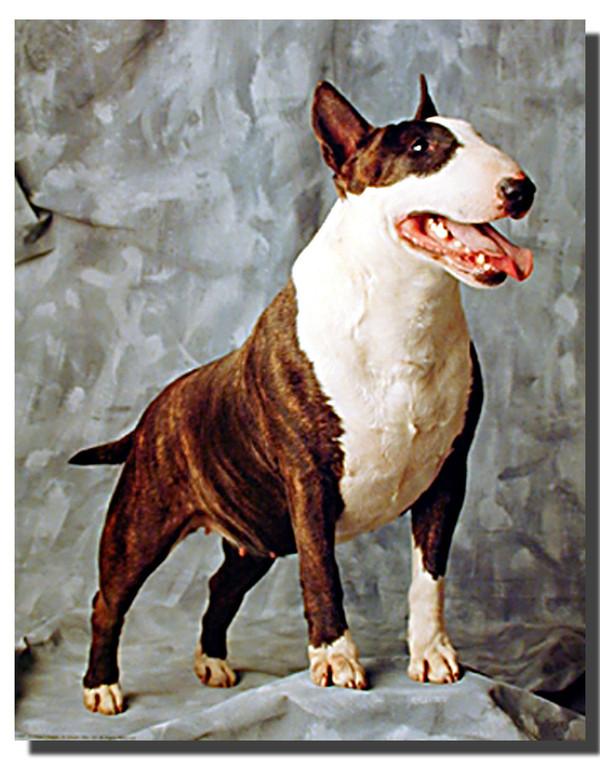 Terrier Poster
