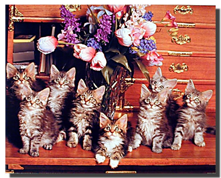 Desktop Kittens Poster