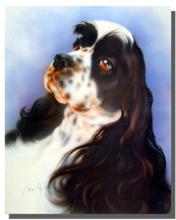 Springer Spaniel Dog Poster