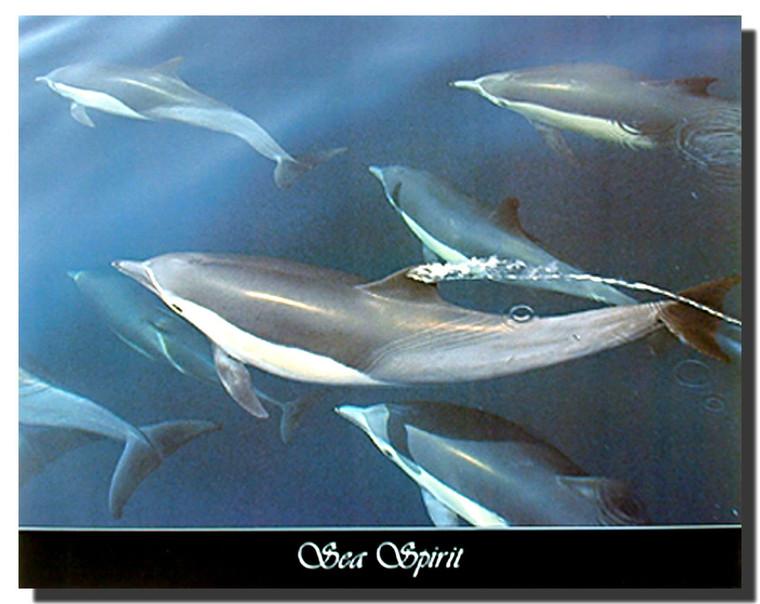 Sea Spirit Posters