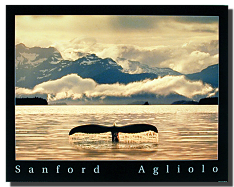 Whale Tail Poster- Sanford Agliolo