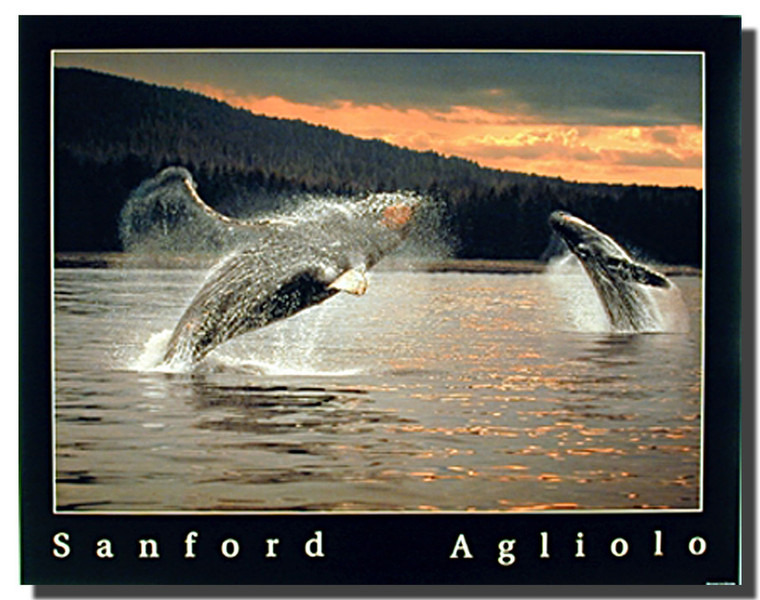 pictures of humpbacks