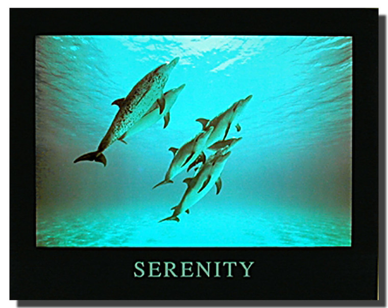 Dolphins Posters- Serenity