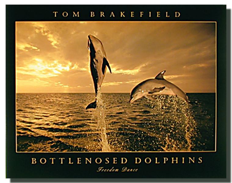 Bottlenose Dolphins Dance Posters