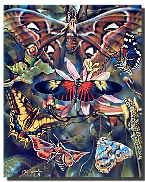 Butterflies Poster- Collage