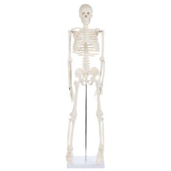 Anatomy Lab Essential Mini Skeleton (A-106652)