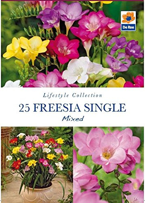 Pack of Lifestyle Collection Garden Bulbs - 16 Freesia Single Mixed