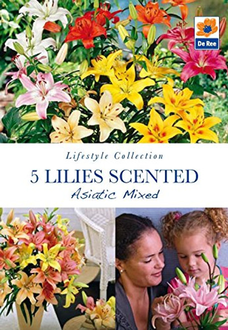 Lilies Scented Asiatic Mixed (5 Bulbs)