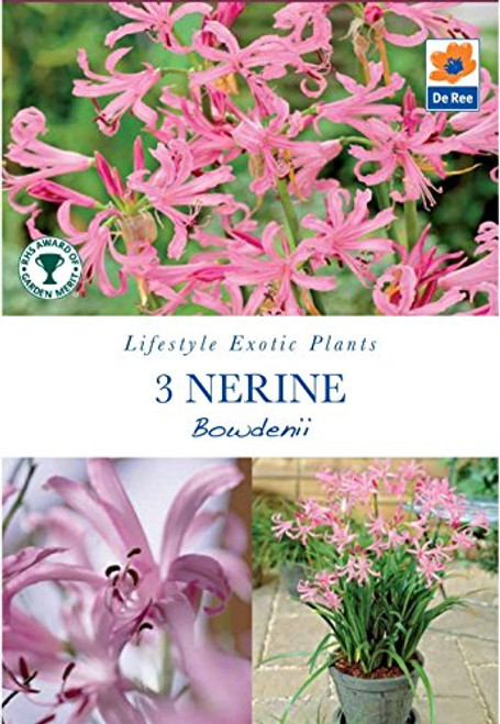 Lifestyle Collection Nerine Bowdenii (3 Bulbs)