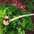 Cauldron Long Pipe All Natural Churchwarden | FloggleWerks