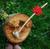 Myrtle Hobbit Pipe | FloggleWerks