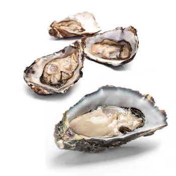 Fresh XXL Pacific Oysters