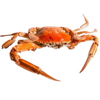 WHOLE COOKED BLUE SWIMMER CRABS