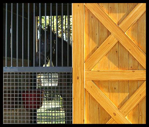 ef-filly-door2.jpg