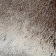 Reindeer Hide (120 x 100cm) (RD309)