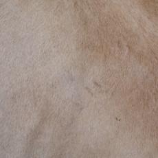 Cowhide Rug APR004-21 (240cm x 200cm)