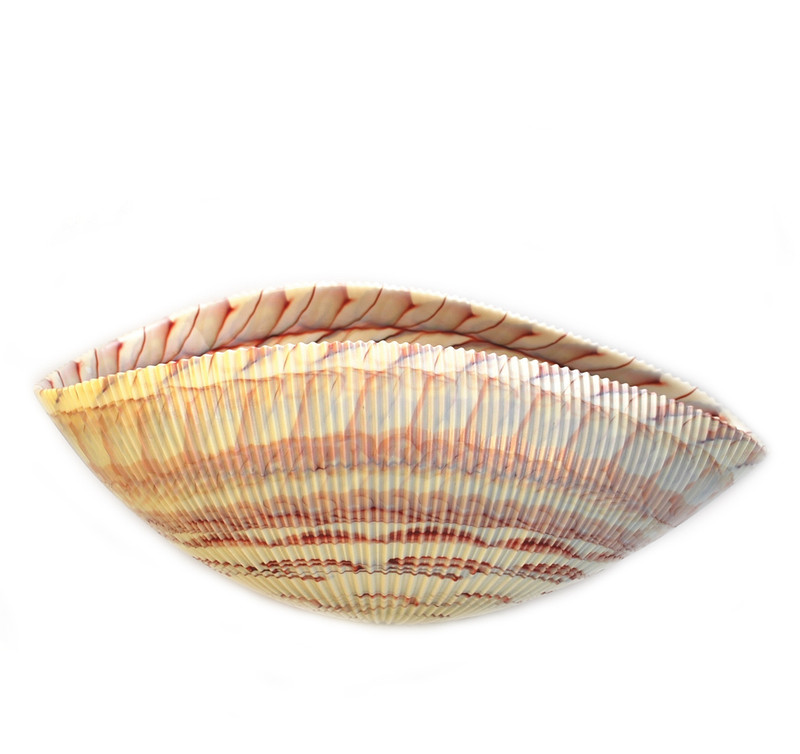 Murano Glass Shell Bowl Ivory Red