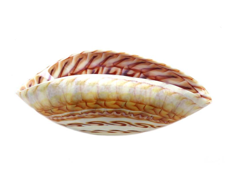 Murano Glass Nautilus Bowl