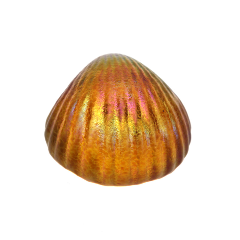 Shell Paperweight Amber