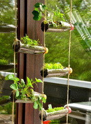 Vertical Gardens For Home Decoration